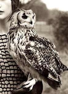 owlhawk